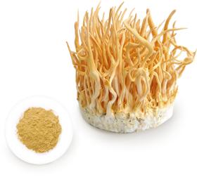 冬虫夏草は、自然界では子嚢菌類バッカクキン科のキノコです。